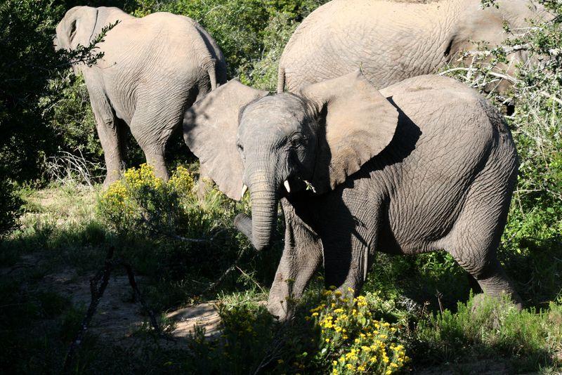 11  Sept 13 Africa 35