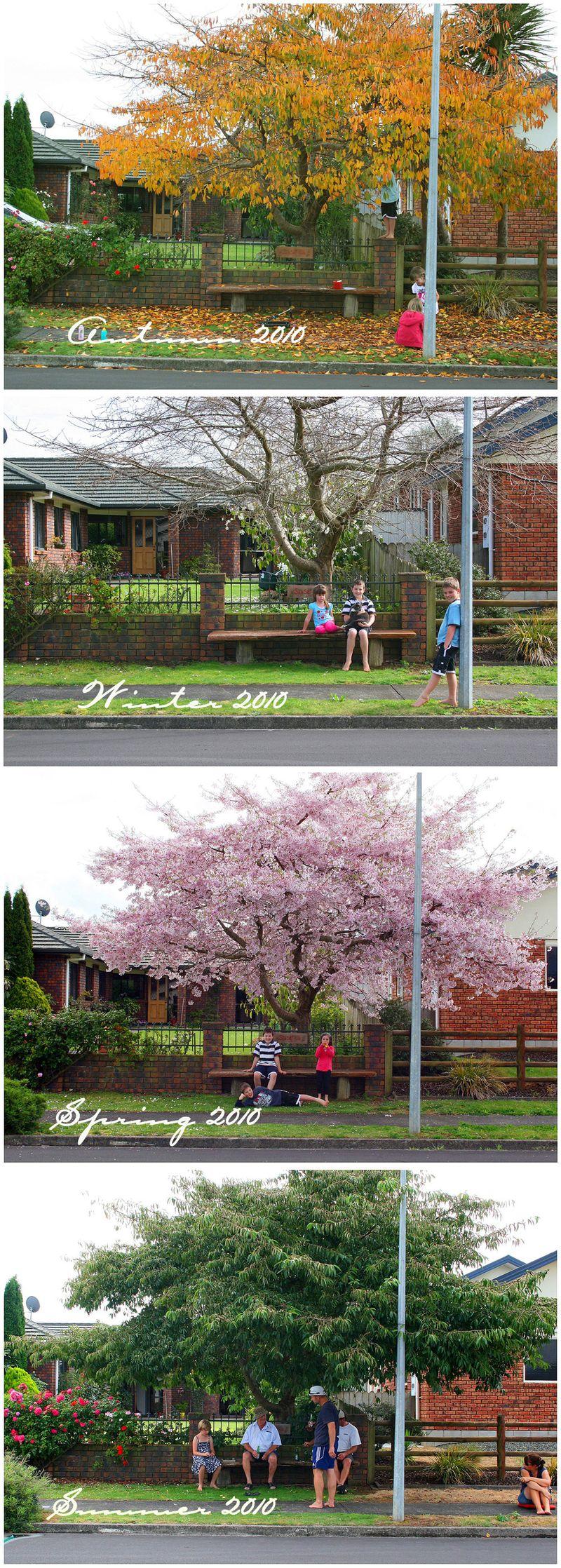 2010 Cherry Tree Pics 2