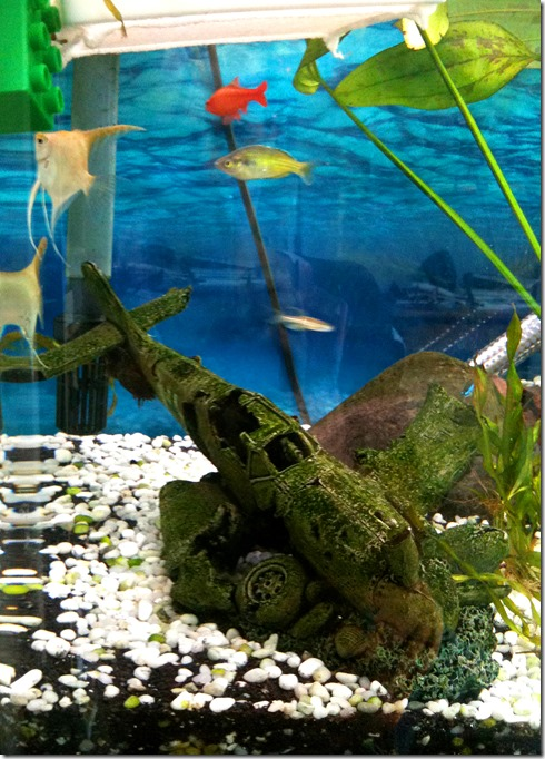 13 03 Mar 01 fish 2